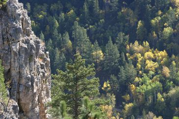 The Black Hills - Spearfish Canyon